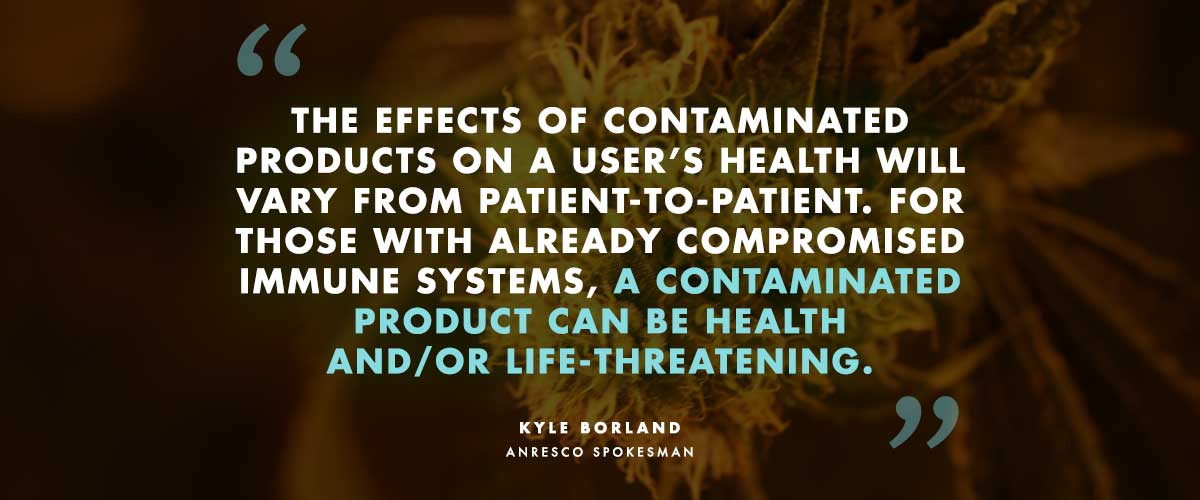 """Anresco's Kyle Borland speaking of contaminated marijuana: """"The effects of contaminated products on a user's health will vary from patient-to-patient. For those with already compromised immune systems, a contaminated product can be health and/or life-threatening."""""""