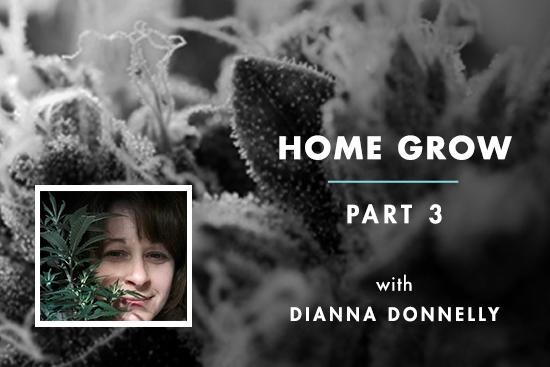 Home Grow #3: Clones Come Home