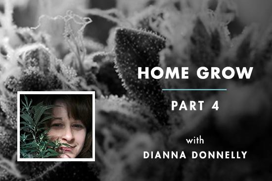 Home Grow #4: Root Bound Ladies