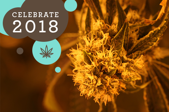 What a Year for Cannabis