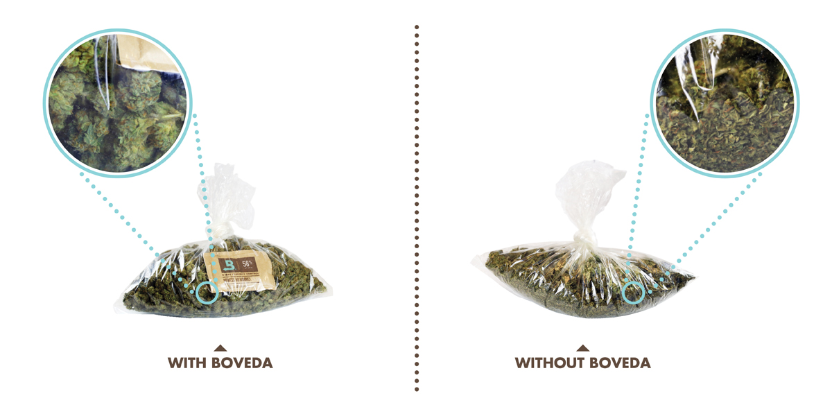 Boveda Vs Without