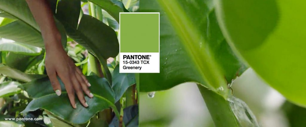 Pantone's color of 2017 was Greenery.