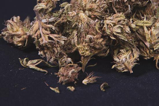 For Cannabis, Moisture Matters