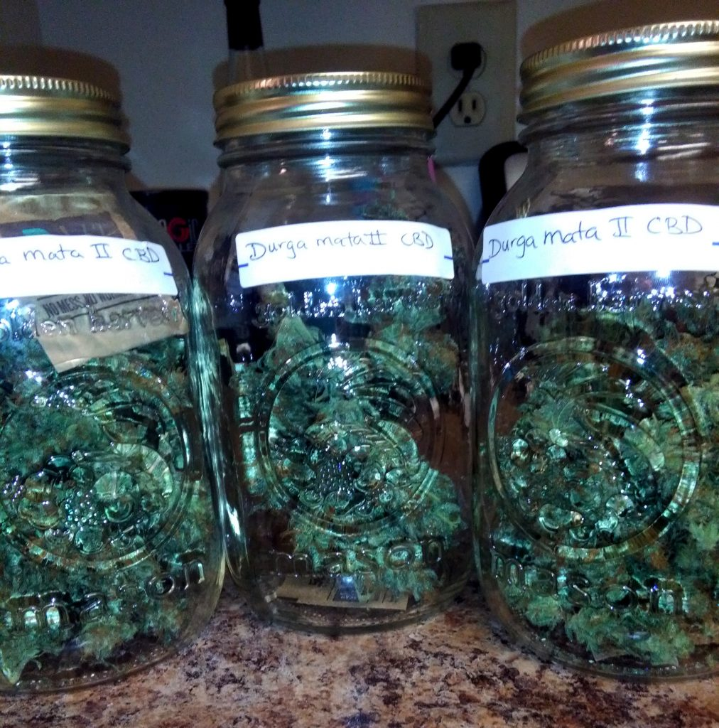 Jars full of cannabis protected with Boveda. If I would have cured flower that dry without a terpene shield like Boveda, I would have permanently destroyed terpenes and trichomes.