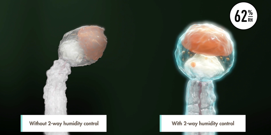 Illustration of a trichome protected by Boveda's terpene shield and one without. Boveda's terpene shield prevents cannabinoids and water weight from evaporating.