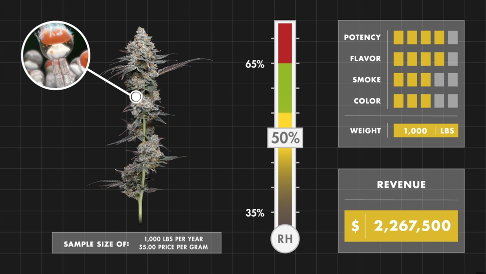 Cannabis stored at 50% RH. Even within that optimal RH range where cannabis flower realizes its full potential, there are still tens of thousands of dollars to be gained from precisely maintained RH. Additionally, cannabis in the optimal humidity range maximizes all the qualities that attract and retain customers.