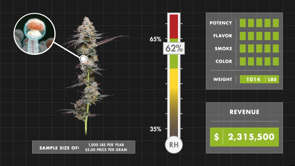 Cannabis stored at 62% RH. Even within that optimal RH range where cannabis flower realizes its full potential, there are still tens of thousands of dollars to be gained from precisely maintained RH. Additionally, cannabis in the optimal humidity range maximizes all the qualities that attract and retain customers.