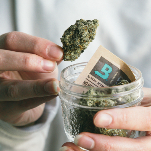 Holding jar of cannabis and boveda