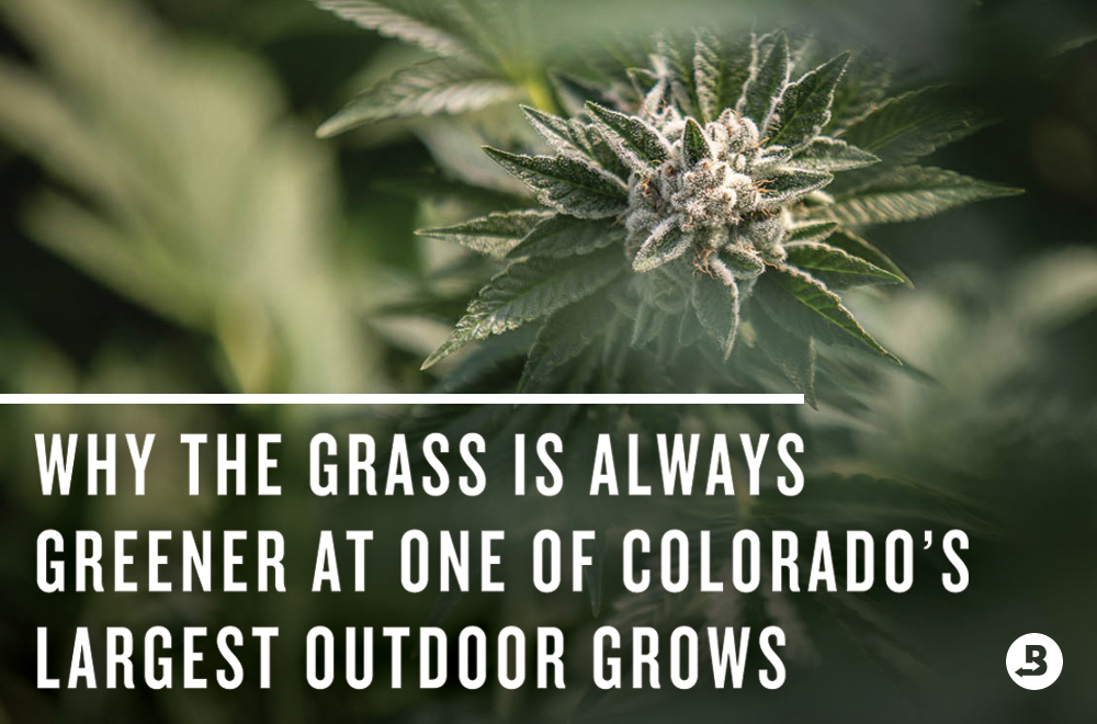 Maggie's Farm is an outdoor grow in Colorado. Maggie's Farm MJ is Clean Green Certified™. They protect their terps with the original terpene shield™ created by Boveda.