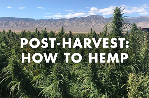 How to Dry, Cure & Store Smokable Hemp Flower