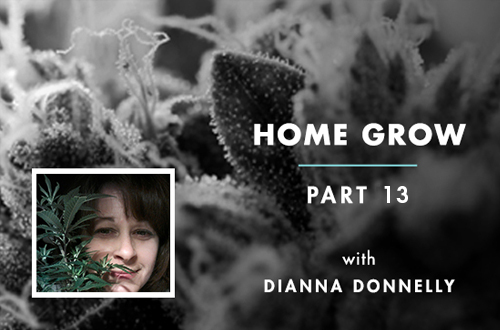 Home Grow #13: Wet Trimmer Turns Dry Trimmer, Here's Why