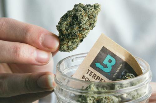 Standard Storage For Cannabis