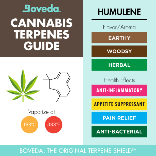 humulene terpene info chart - flavor/aroma and health effects